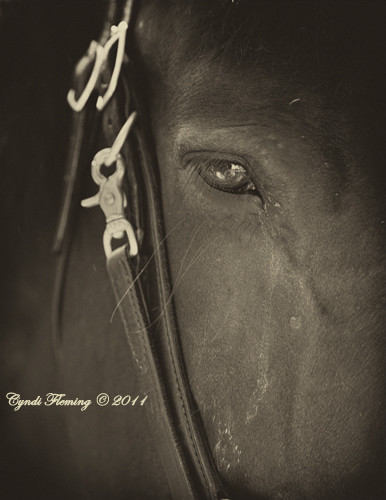 OPP Horse